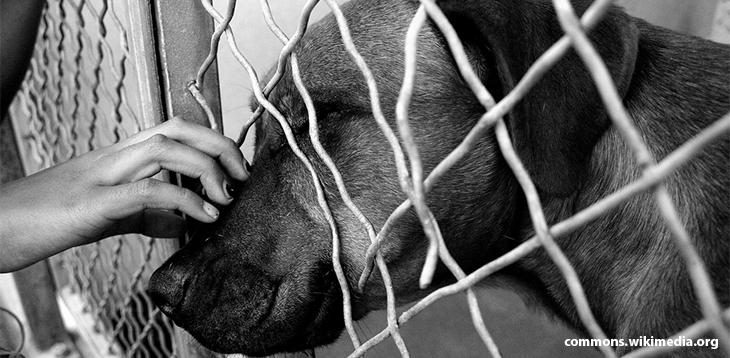 A felelős állattartás – Egy menhelyi kutya vallomása