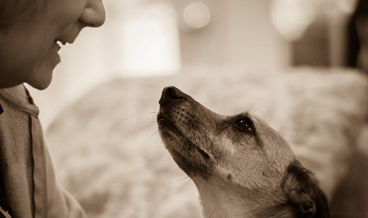 10 ok, amiért érdemes örökbe fogadnod egy kutyát