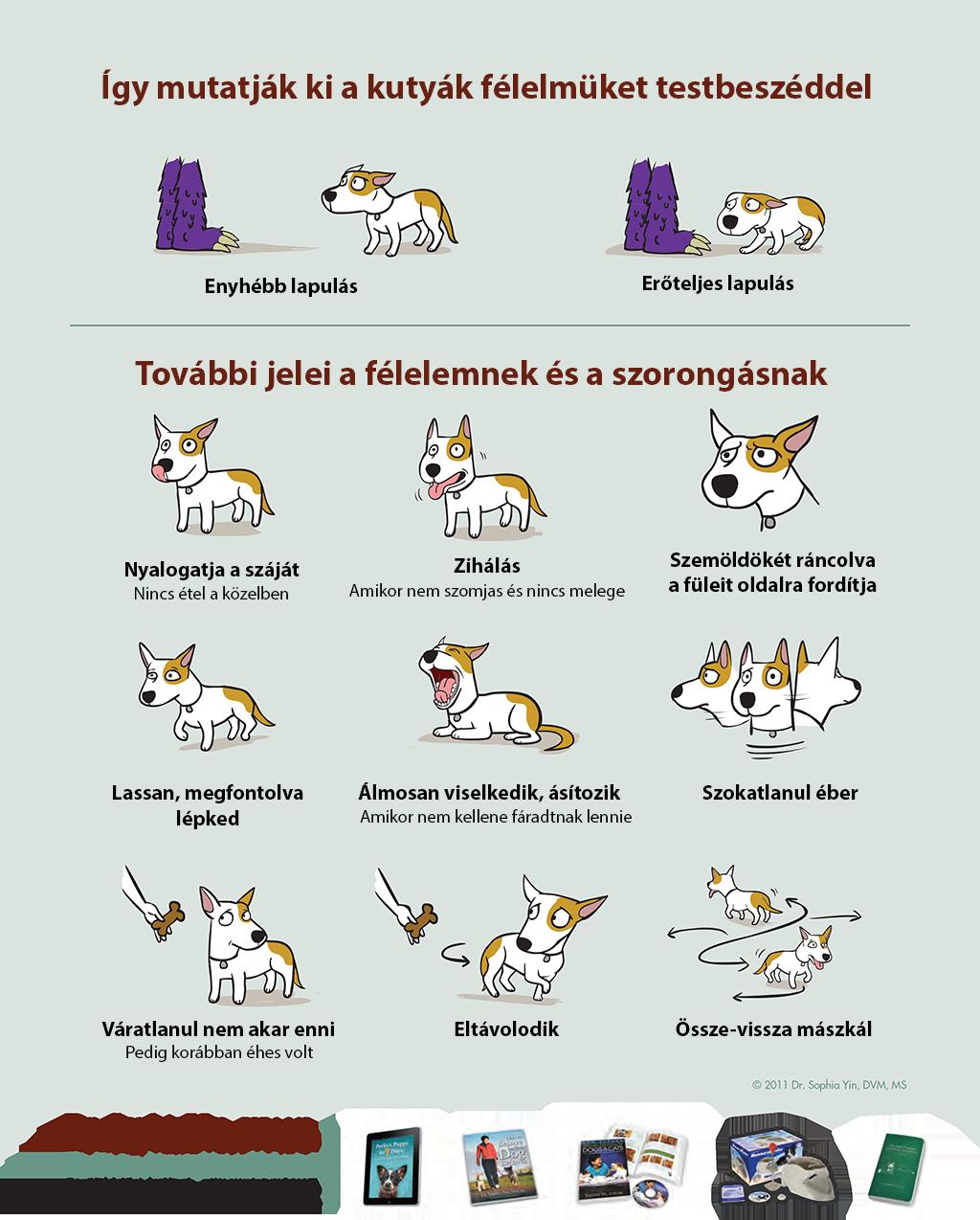 Így mutatják ki a kutyák ha félnek vagy szorongnak