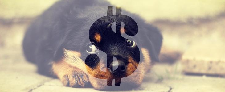 Felelős állattartás IX. fejezet – Az illegális kölyökkutya kereskedelem hátterei