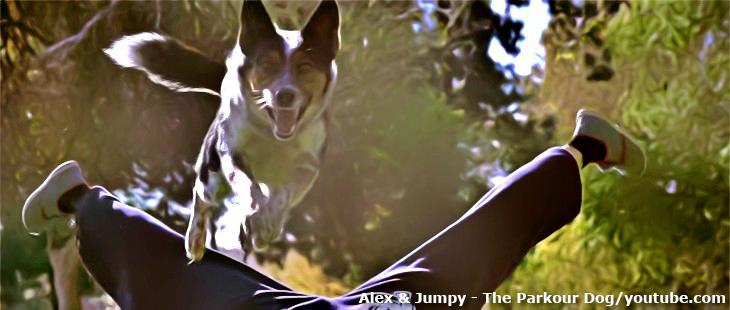 Jumpy, a parkour kutya