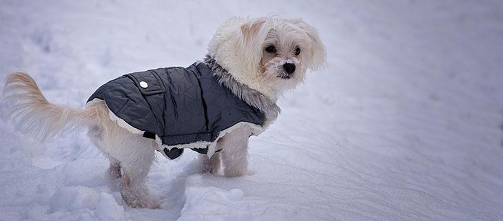Útmutató, hogyan tarthatod melegen a kutyád odakint a téli hónapokban
