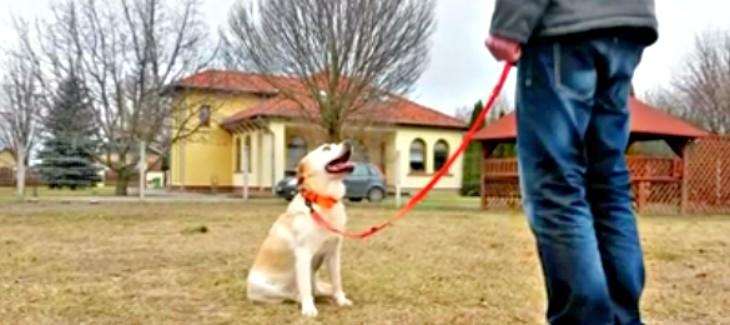 Kutya oktató videó – Helyben maradás 1. rész