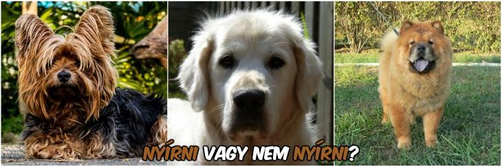 Nyári szőrzetápolás a kutyáknál