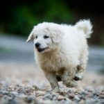 Halasi-Pásztor Kennel